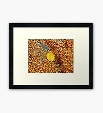 Premature Autumn Aspen Leaf Framed Print