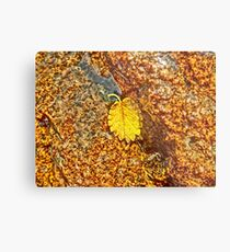 Premature Autumn Aspen Leaf Metal Print