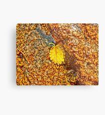 Premature Autumn Aspen Leaf Metal Print