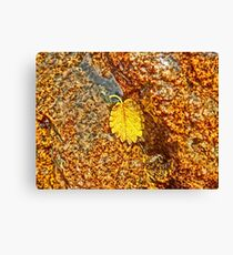 Premature Autumn Aspen Leaf Canvas Print