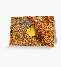 Premature Autumn Aspen Leaf Greeting Card