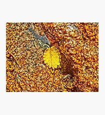Premature Autumn Aspen Leaf Photographic Print