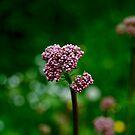 Spring by ROSE DEWHURST