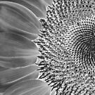 Silver Sunflower by Tom Mostert