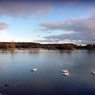 Evening by the Lake by Meladana