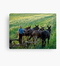 Amish Farm Scene Leinwanddruck
