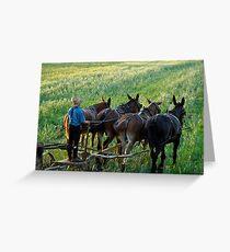 Amish Farm Scene Greeting Card