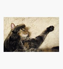 Purr-fectly Contented. Photographic Print