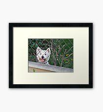 Nosy Parker Framed Print