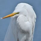 A Great Egret by Jeff Ore