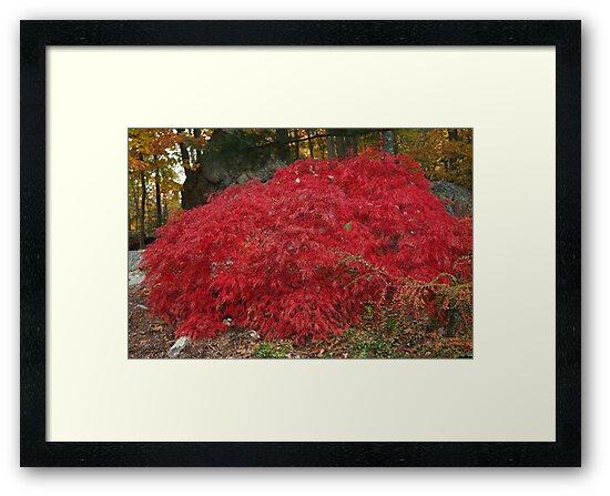 Burning Bush in the Fall by daphsam