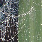 Wet Spider Web  by Krissy-Art