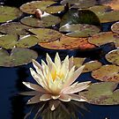 Mission Fountain Water Lily (San Juan Capistrano Spanish Mission, California)  by Brendon Perkins
