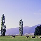 Grazing on the Canterbury Plain by Alex Cassels