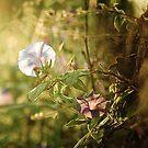 Pure morning by Alina Uritskaya