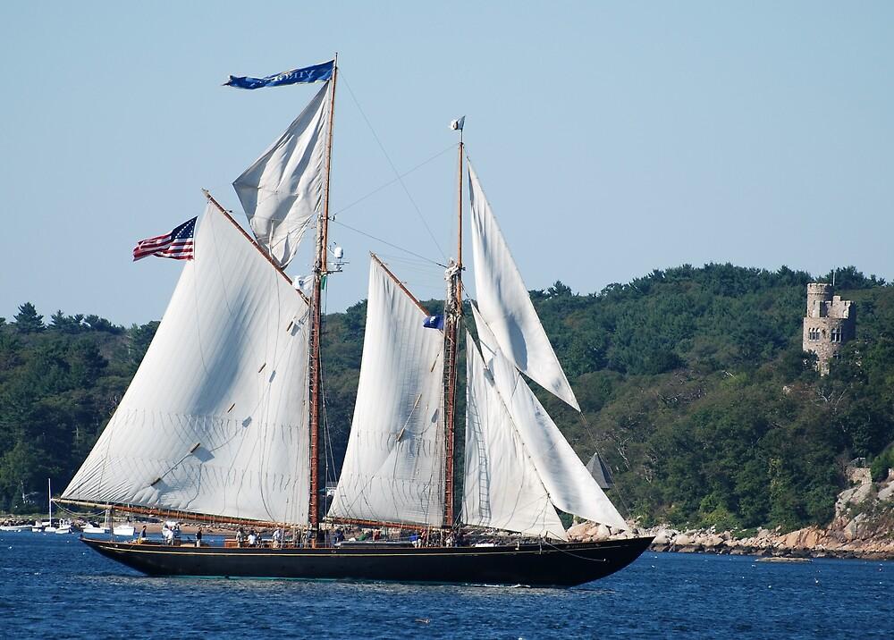 Schooner Virginia on Gloucester Harbor by Steve Borichevsky