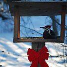 Pileated Woodpecker in the Feeder by Diane Blastorah