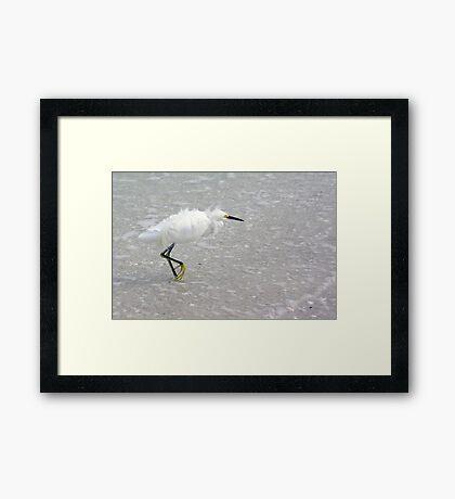 Egret In Wind Framed Print