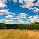 Birch Flagpole by J Jennelle