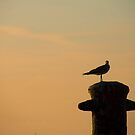 Seagull  by Michelle DuBose