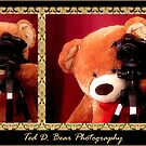 ~ Ted D. Bear Photography ~ by Donna Keevers Driver