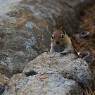 Chipmunk Playing Hide And Seek by Diego Re