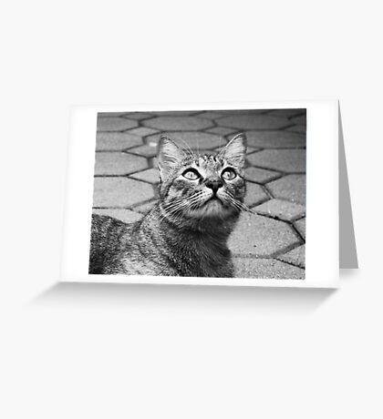 Curious Tabby Greeting Card