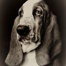 The Bassett Hound by Rory Garforth