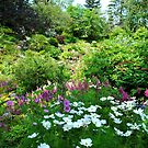 A Garden in the Woods by Sandra Fortier