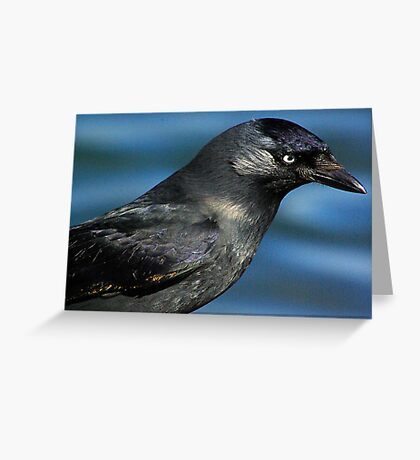 Jackdaw Greeting Card