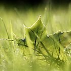 Green in green by SylBe
