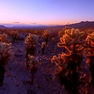 Prickly by Chad Dutson