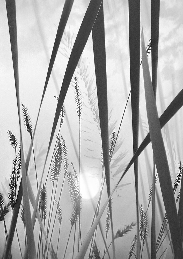 through the looking grass (bw) by John Poon