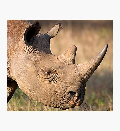 Black Rhino Profile Photographic Print