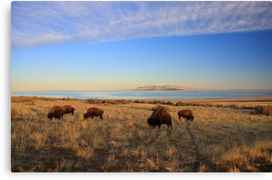 Where The Buffalo Roam by Gene Praag