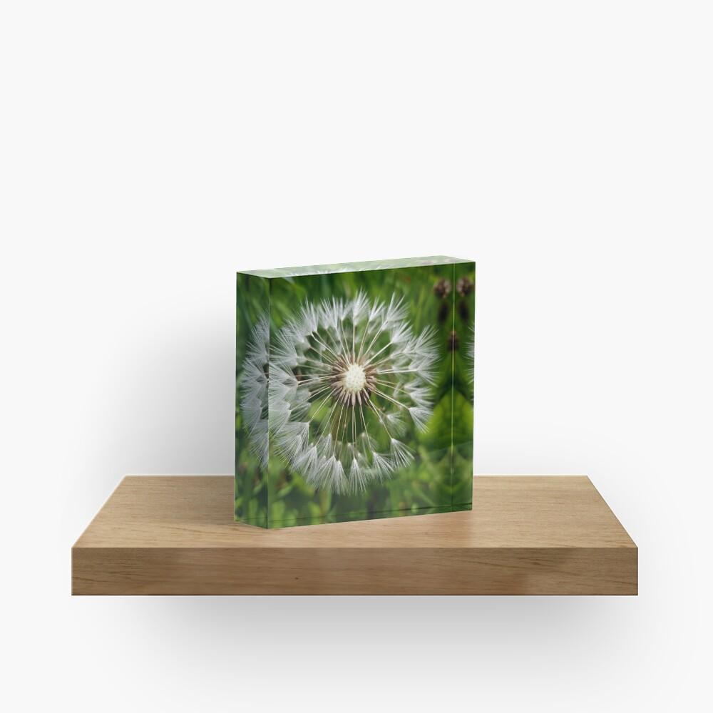 Dandelion Acrylic Block