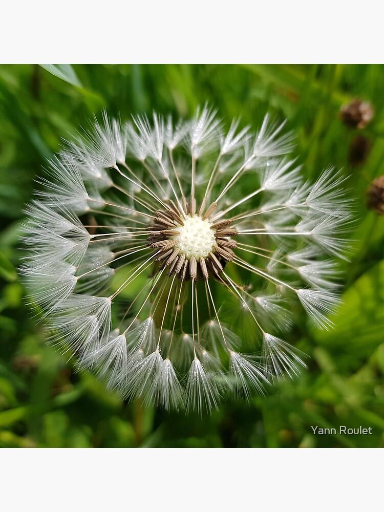Dandelion by fan2zik