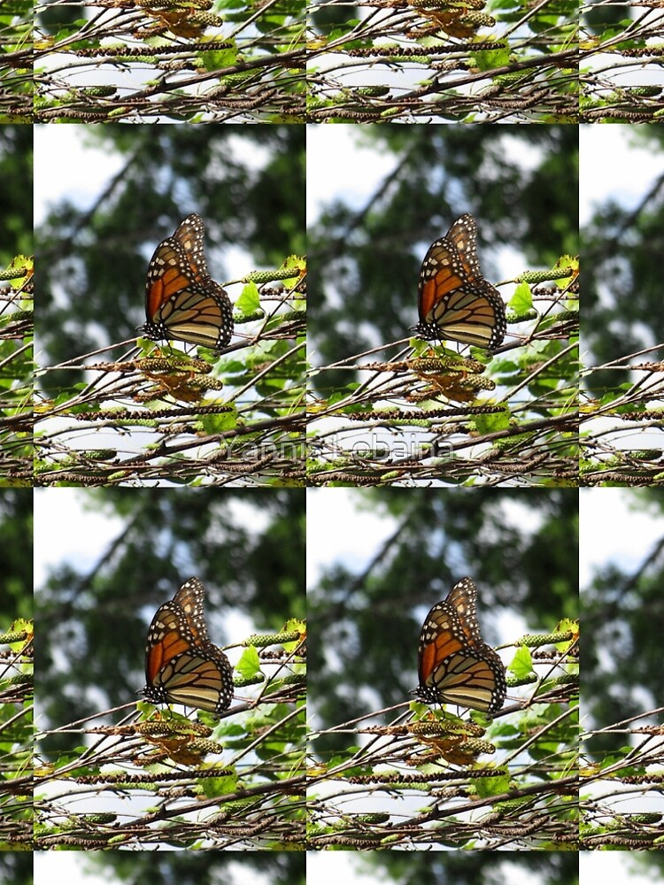 Monarch butterfly before flying in search of sun By Yannis Lobaina by lobaina1979