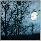 Moon Rising by Mary Ann Reilly