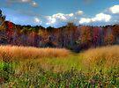 Fields of Gold - 2 by Marcia Rubin