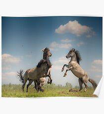 Prancing Horses Poster