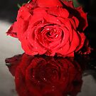 Rose Reflection by Evette Lisle
