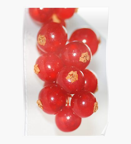 Red Currants Poster