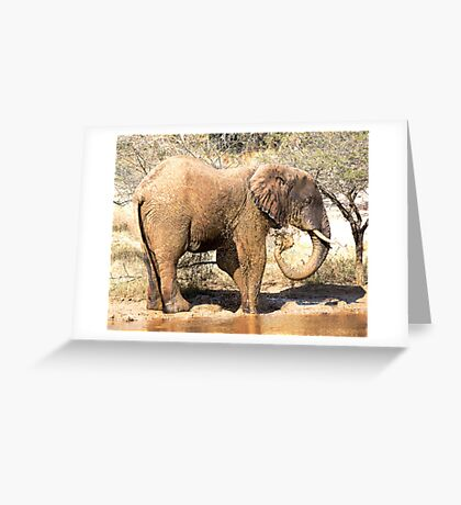 Mud Bath Greeting Card