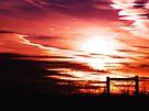 Winter Sunset  by Marcia Rubin