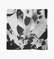 Succulent in black and white Scarf