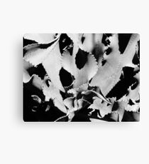 Succulent in black and white Canvas Print