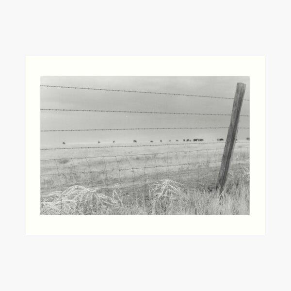 Fenced in Westward Art Print