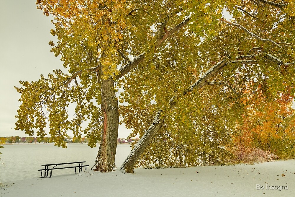 Snowy Colorful Autumn Trees by Bo Insogna