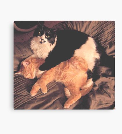 Kitty Cat Cuddle Canvas Print